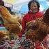 Harmincegy településen mutatták ki a madárinfluenzát Magyarországon