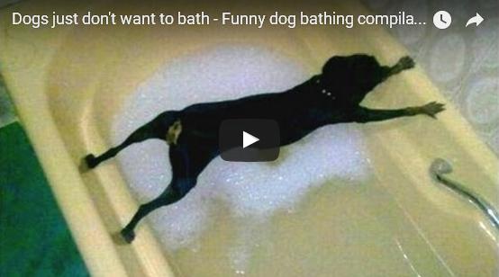 Lo que hacen estos perros para evitar el baño | Vídeo
