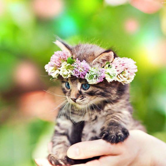 Super Cute Cat Picture for Whatsapp