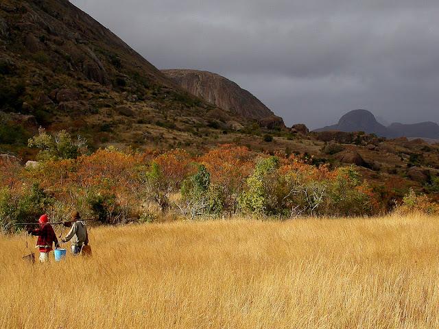 Les lémuriens habitent la forêt au pied du massif des 3 sœurs : de gauche à droite, Amboalady, Andrarambola et Iandrambaky, qui culmine à 1475 m.