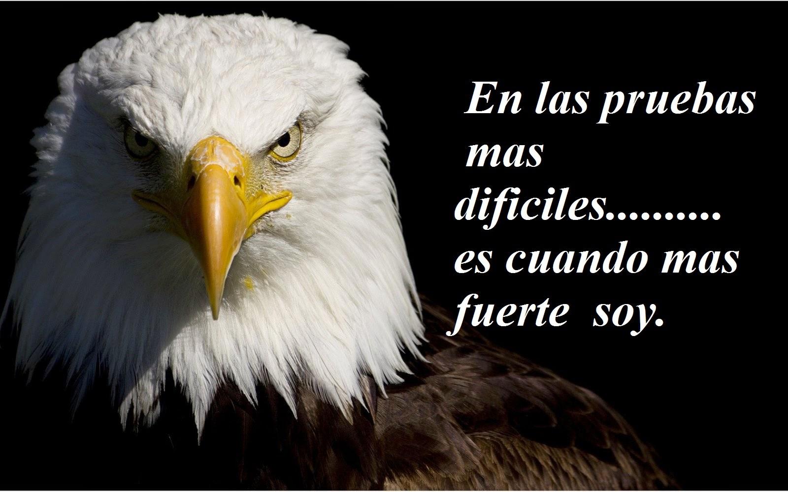 Imagenes Lindas Para Compartir Fb Aguilas Con Frases De