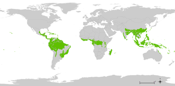 Jenis Bioma dan Penyebarannya di Bumi