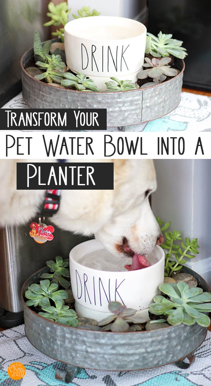 Turn your pet's water bowl into a super cute planter! This is genius - let the dog water the plants when he drinks. Uses pet friendly plants to create and succulent garden and DIY dog bowl in one. Works for cats too! Love this idea for a pet DIY project. #raedunn #pets #DIY #dogs #cats