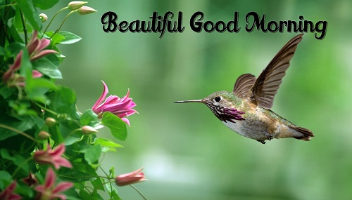 Awesome Good Morning Nature Picture With Birds