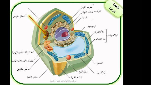 تركيب الخلية ووظائفها أحياء