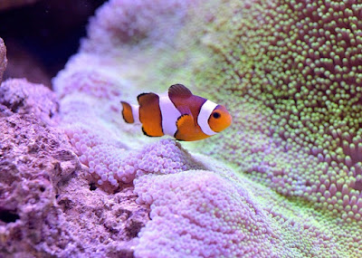 Atlantic City Aquarium in New Jersey
