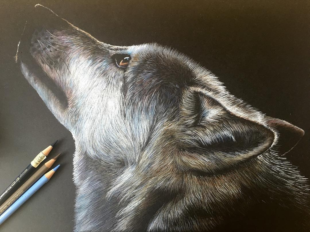 08-Husky-Bethany-Vere-Colored-Pencils-Realistic-Animal-Drawings-www-designstack-co
