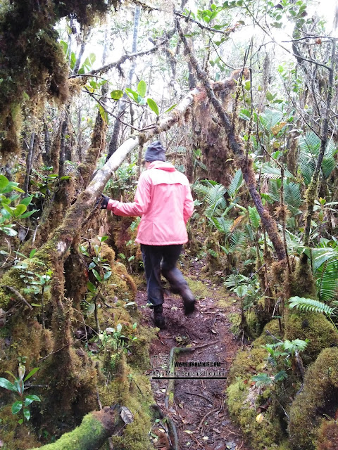 Pengalaman Mendaki Gunung Trus Madi Via Sinua Part 2