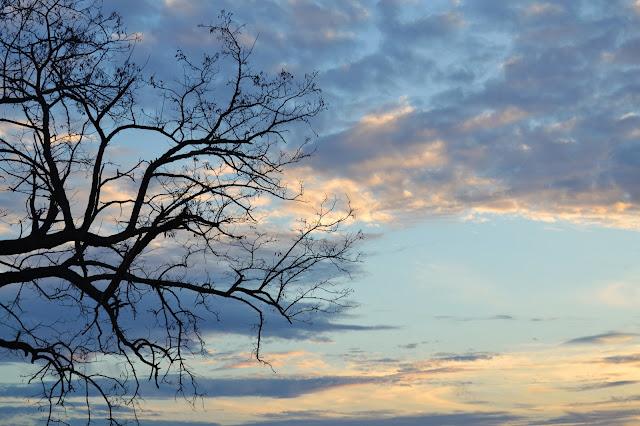Rama de árbol desnuda
