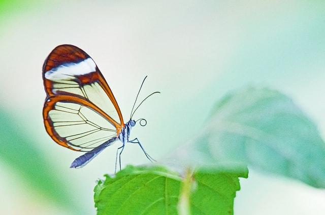 اجمل الصور عن الفراشات