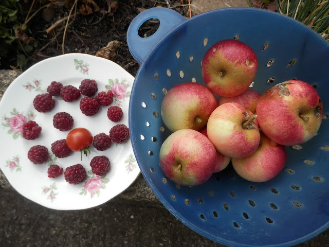 My homegrown harvest, August 2018.  From UK garden blogger secondhandsusie.blogspot.com #gardenharvest #gardenblogger #suburbanpermaculture