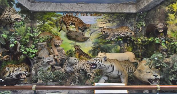 Museum Rahmat Internasional Wildlife Galery