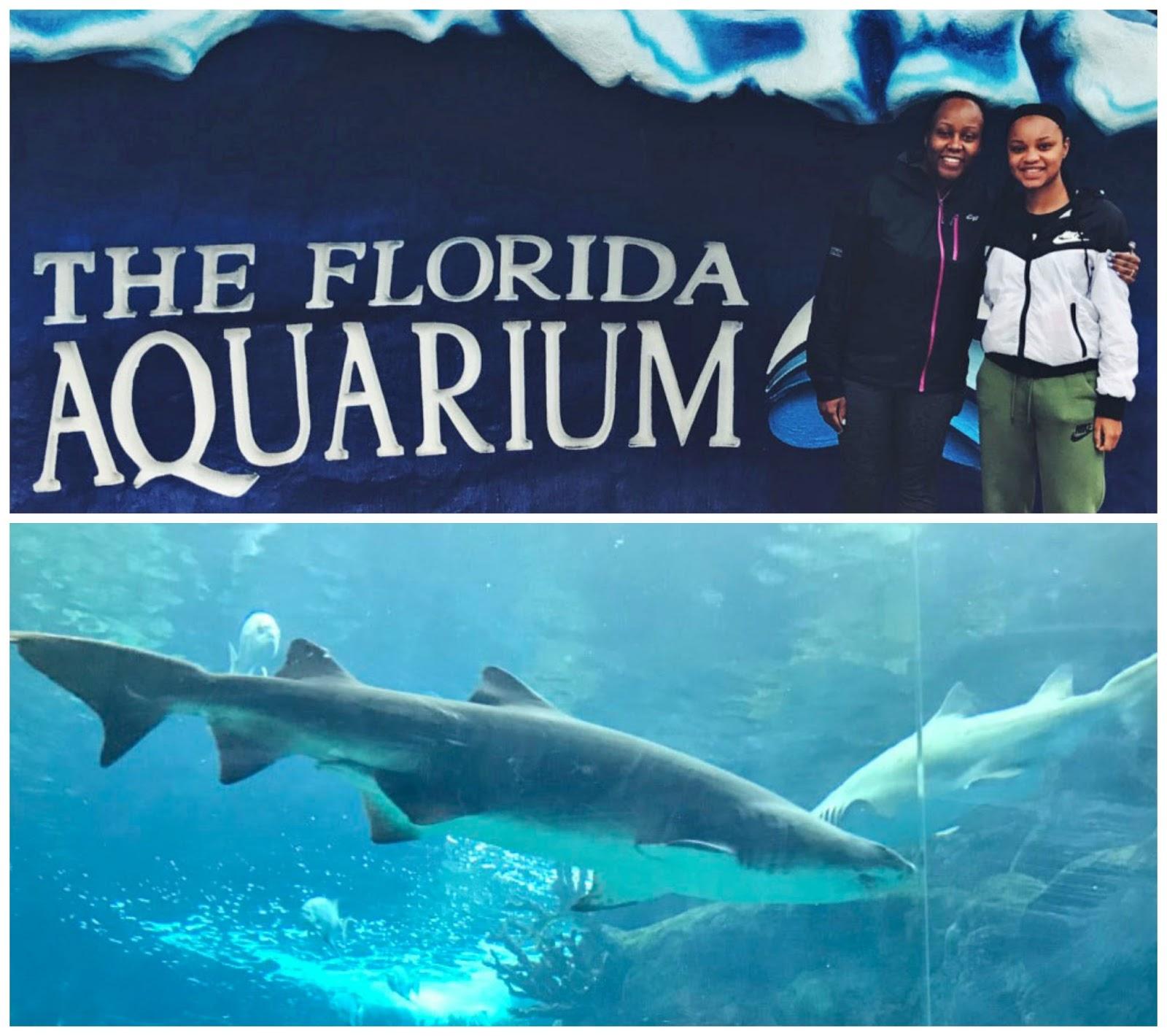 florida aquarium5