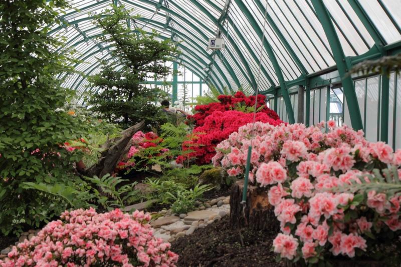 Azalea Greenhouse en Invernaderos Reales de Laeken