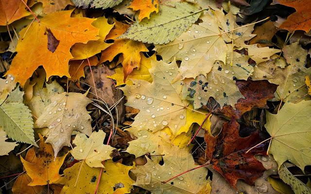 Verschillende soorten en kleuren herfstbladeren