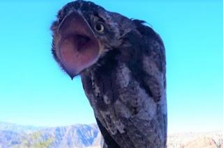 Se trata de una extraña ave y totalmente inofensiva que habita el Litoral Argentino. Se ha visto en esta zona de Iglesia desde hace varios días, provocando alarma entre los vecinos.
