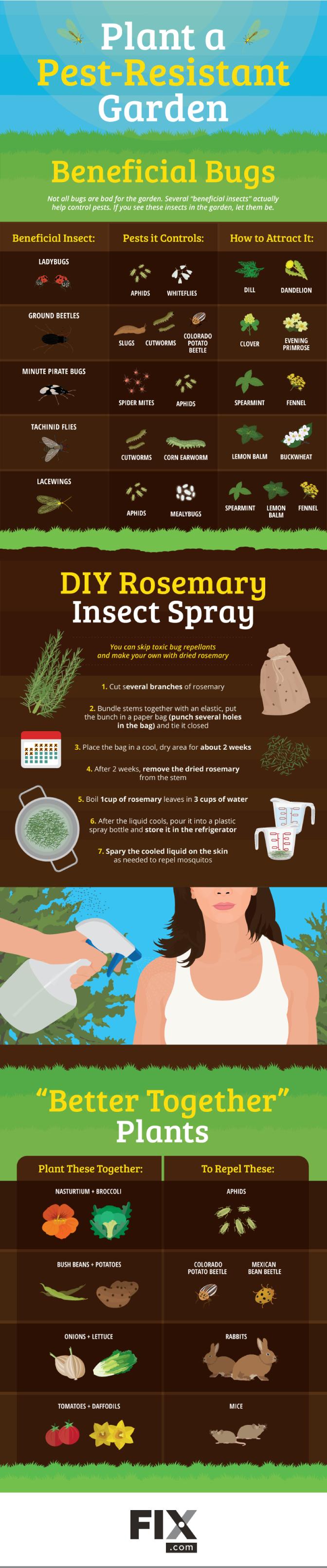 Plant a Pest-Resistant Garden #infographic