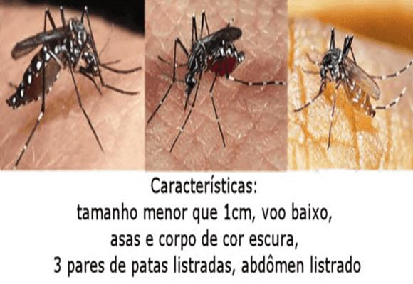 Dengue-aedes-aegypti