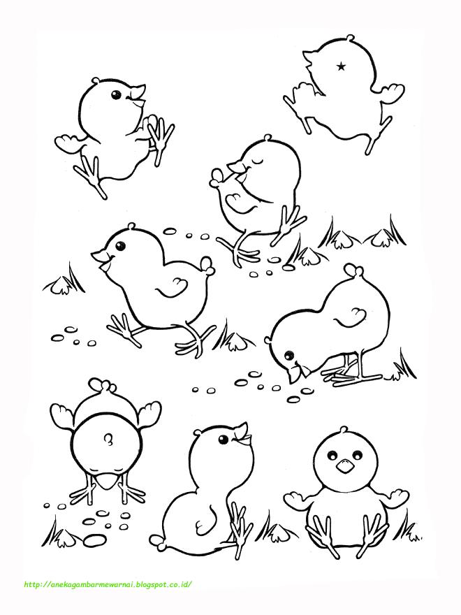 15 Gambar Mewarnai Ayam Untuk Anak Paud Dan Tk
