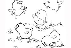 Catatanku Anak Desa Mewarnai Gambar Anak Ayam