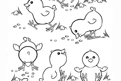 Gambar Anak Ayam Untuk Mewarnai
