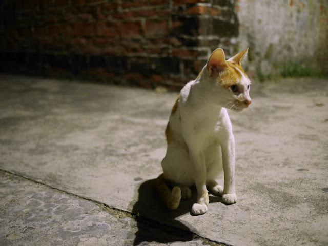cat in a Zhongshan alley
