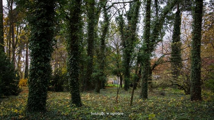 arboretum, Rogów