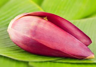 Pastinya semua orang sudah tau apa itu jantung pisang Selain di Sayur, Ini Manfaat lain Jantung Pisang Bagi Kesehatan
