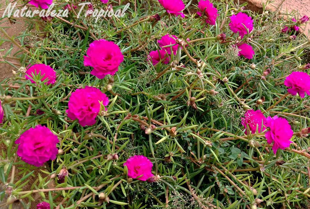 Naturaleza tropical ideas para decorar con plantas suculentas for Que plantas poner en una jardinera