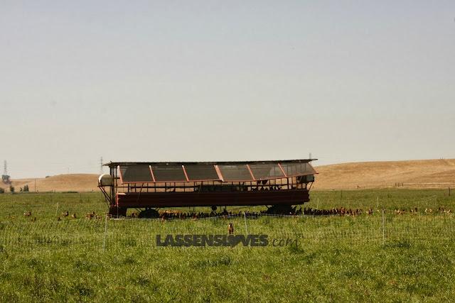 Burroughs+Farm, Organic+farming, Healthy+soil