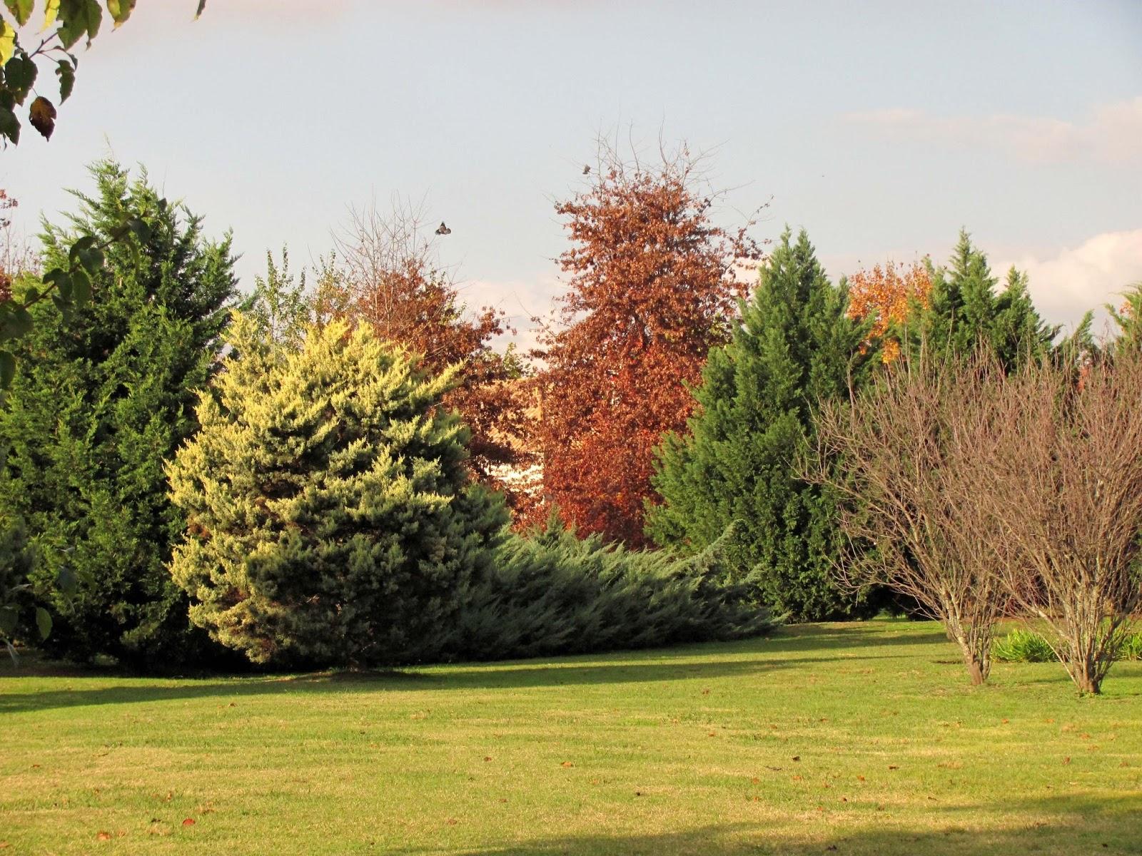 En el jardin con feras perennes for Arboles para jardin de hoja perenne