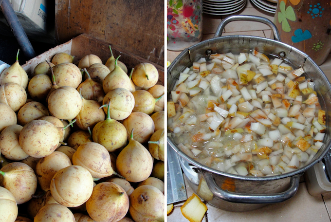 fresh nutmegs and sliced nutmeg fruits being prepared for juice