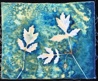 Wet cyanotype, Sue Reno, Image 49
