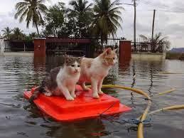 Jangan Sebarkan Info Banjir Palsu!