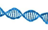 ما هي الكروموسومات - ( تعريف - اين توجد - انواع و حجم و شكل - وظيفة )