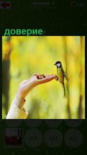 птица сидит на вытянутой руке с доверием к человеку