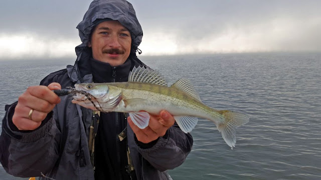 zander caught with kogut lure