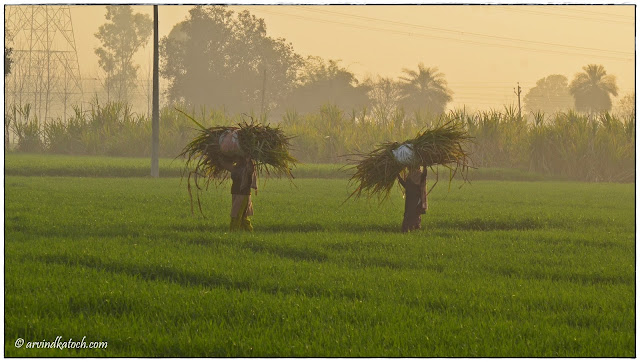 Beautiful Punjab Fields, Two Women, Carrying, heavy load, head, Fields,