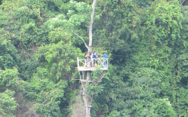 Аттракцион в джунглях