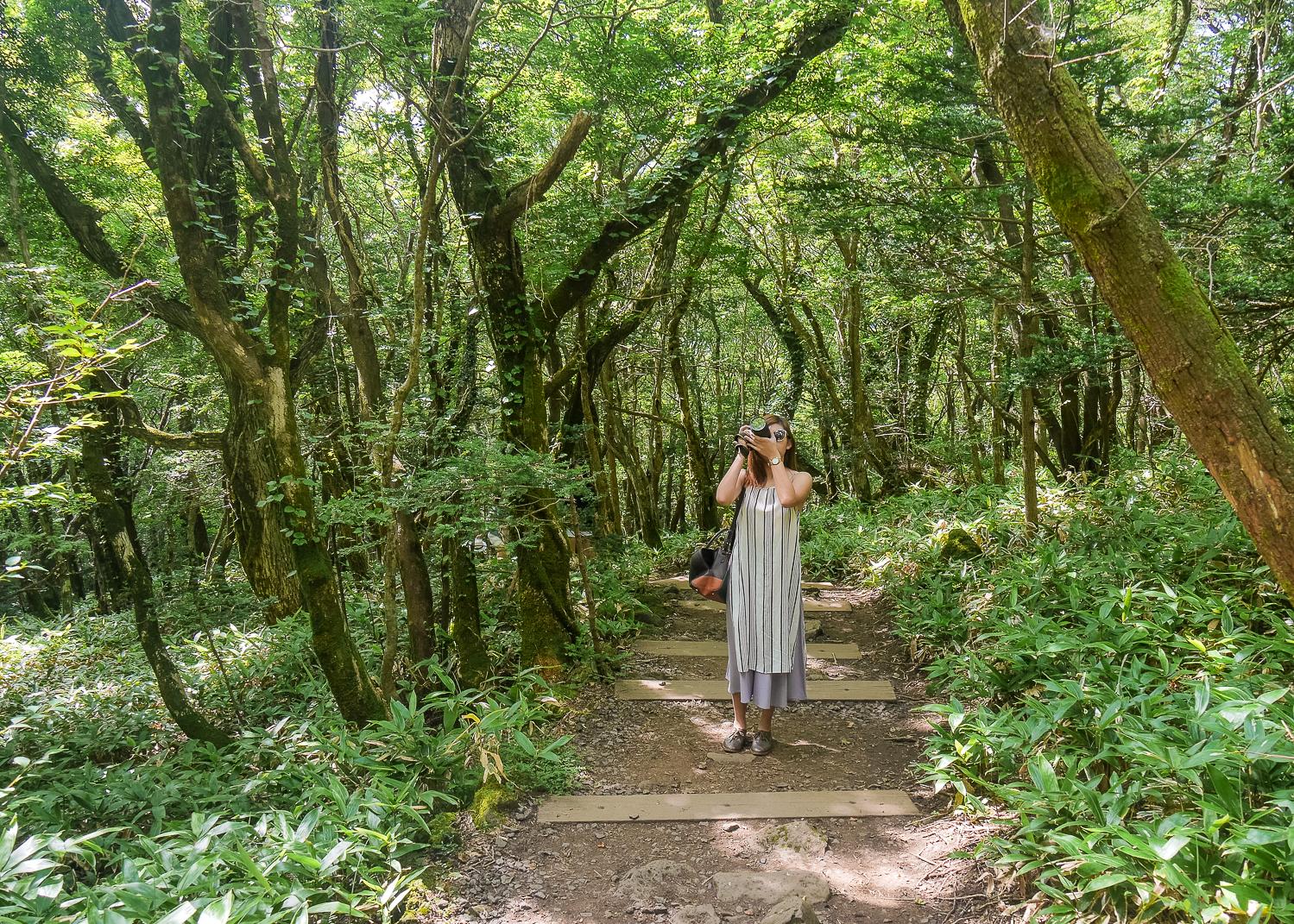 Eoseungsaengak Trail Hiking in jeju