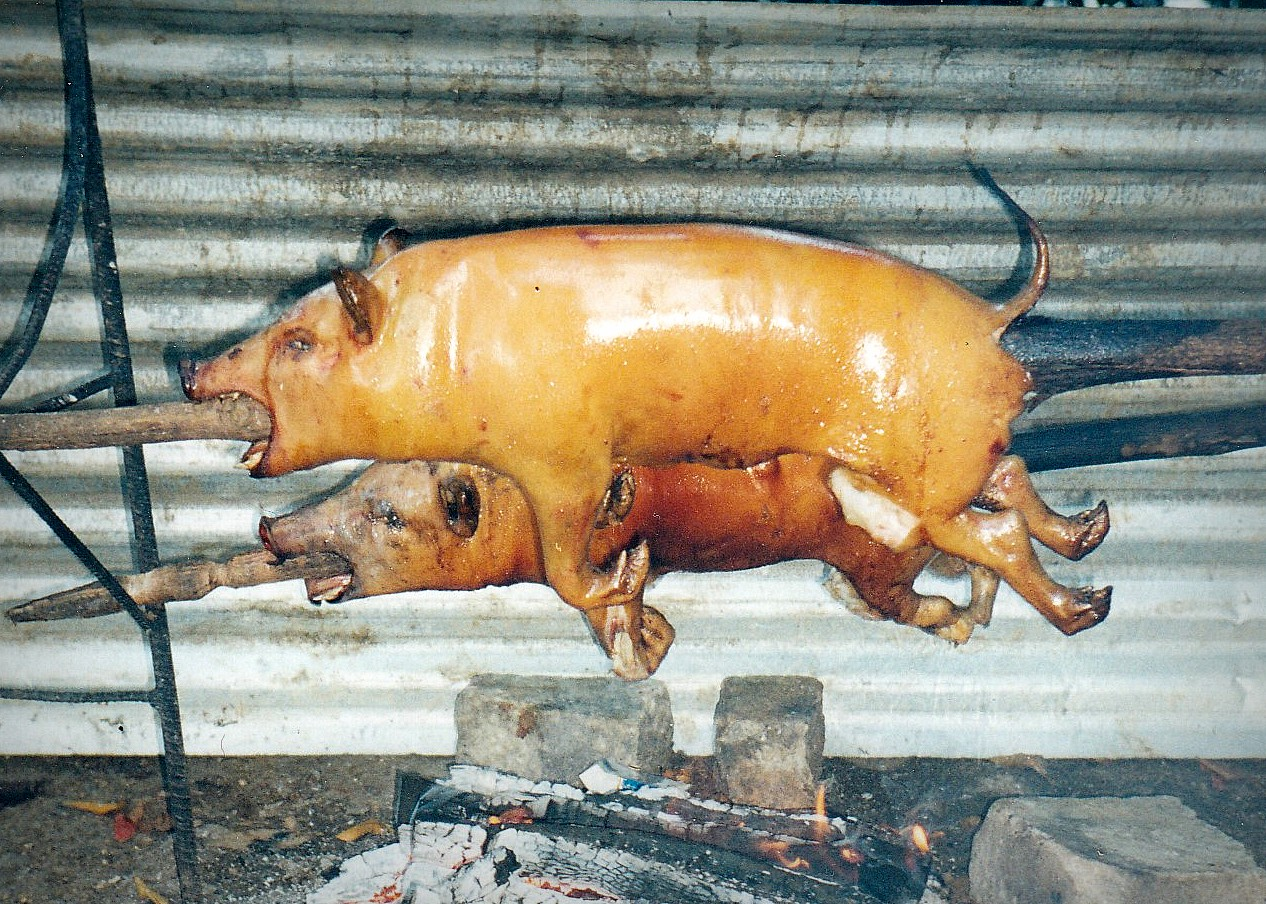 Tonga, where I visited back in 1999 as a keen-eyed medical student, has roasted pig as a delicacy.