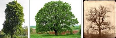 tumbuhan hutan gugur, Ekosistem Darat Dan 6 Bioma