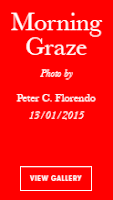 Vogue Italia Morning Graze by Avianquest a.k.a. Peter C. Florendo