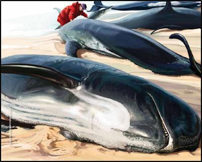 ¿Porque encallan las ballenas en las playas?