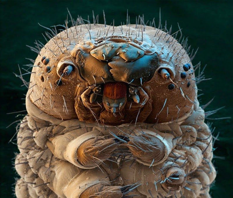 16 Terryfying Images From The Microscope - Caterpillar