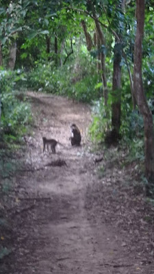 Dschungel Safari Phi Phi Island