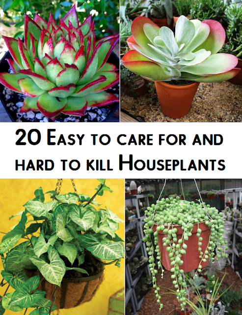 20 easy to care for and hard to kill houseplants plants for Easy maintenance flowers and plants