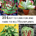 20 Easy to care for and hard to kill houseplants #Plants