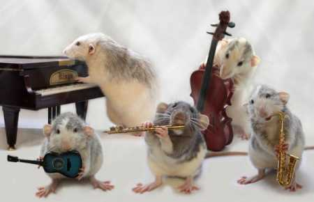 Funny Rat Pictures Collection Fun With Picture Funny Rat Picture Funny Pictures Of Rats Funny Rat Pics Picture Fun Fun With Pictures P O Of