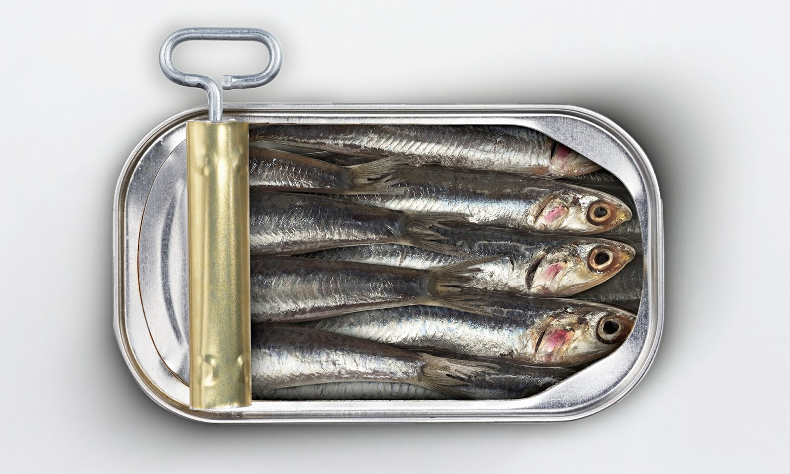 2 Sardines Are Sustainably Fished Abundant In Stock And They Also Well Managed This Is Why Categorized As One Of The Best